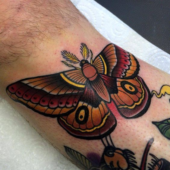 Warm Moth